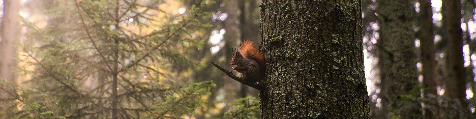 Pixabay, Schwarzwaldandi, Squirrel